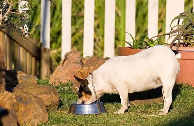 Господарі мають ретельно вимірювати порції, які їсть тварина