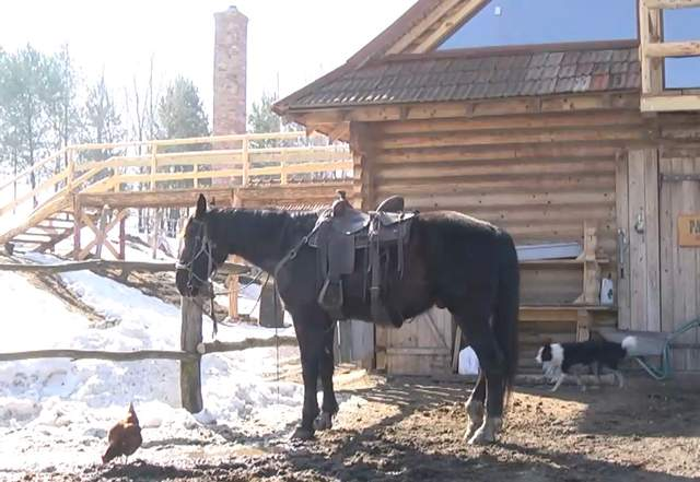 Кінь Трістан