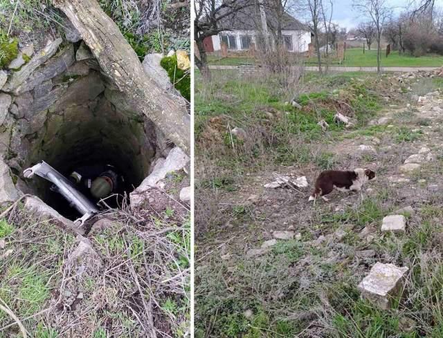 врятований пес в Покровському районі Дніпропетровщини