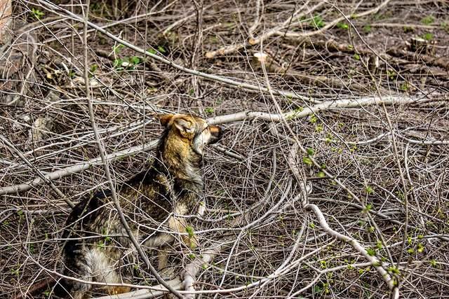 Собака ДСНС Тварина порятунок закинутий колодязь