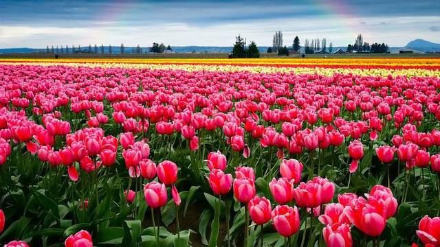 Результат пошуку зображень за запитом долина тюльпанів