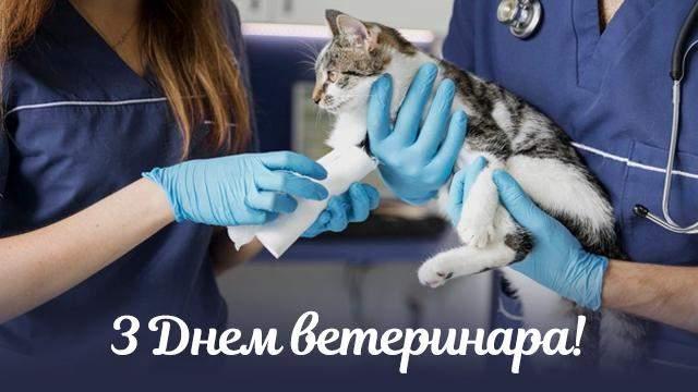 День ветеринара 2021 картинки привітання