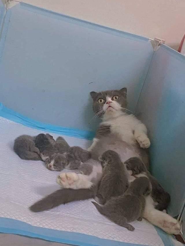 Киця шокована материнством