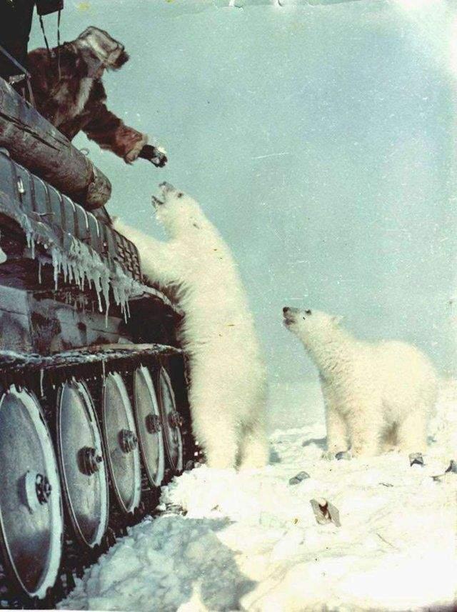 Радянські солдати в Арктиці