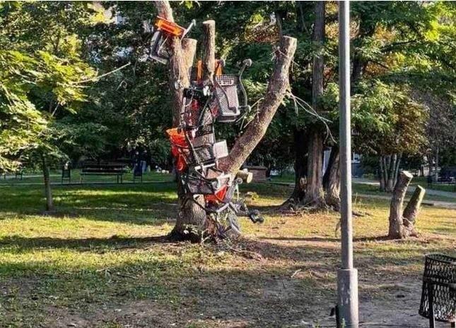 вішають візки На дерево Київ 14 вересня 2021