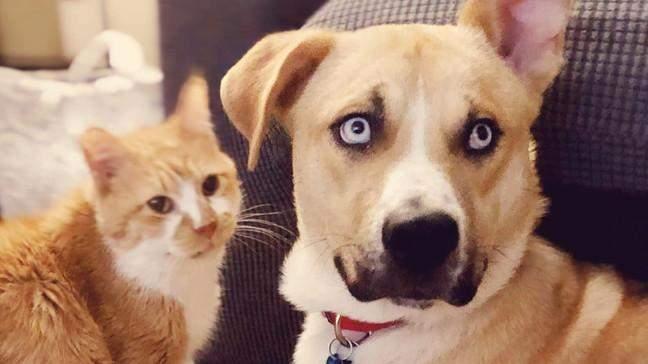 Хенк дуже красивий пес, але йому потрібна особлива родина