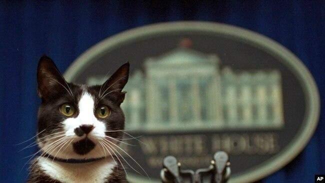 Кіт Клінтонів