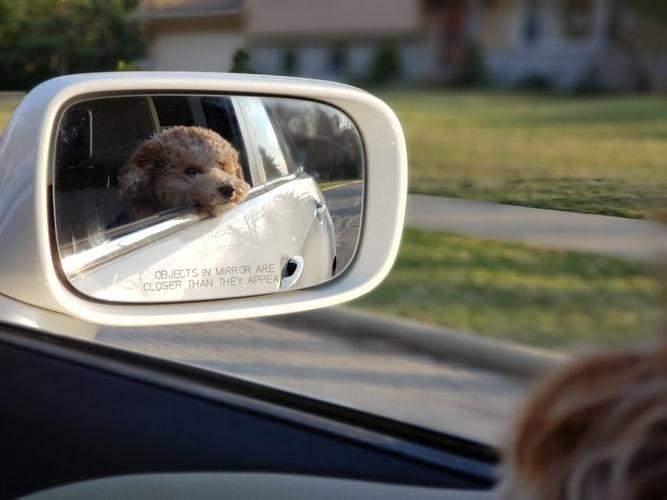 Пес в авто
