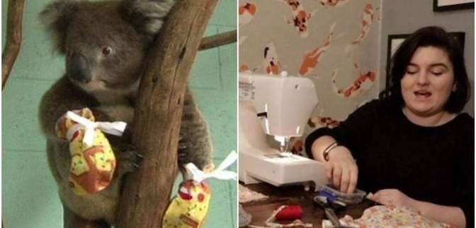 Канада отправила 6 самолетов с перчатками для австралийских коал: милые фото