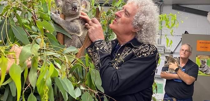 Гитарист Queen Брайан Мэй сыграл для коалы: трогательное видео покорило сеть