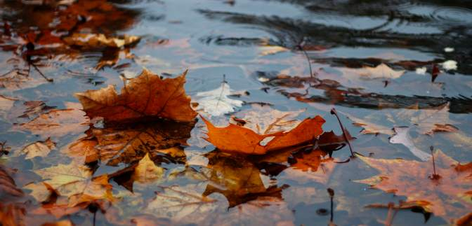 Прогноз погоди на 2 жовтня: майже всі регіони України заливатимуть рясні дощі