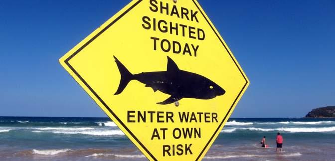В Египте акула напала не только на украинских туристов, но и на гида: новые детали инцидента