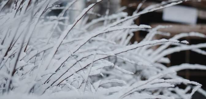 Когда в Украину придут снег и морозы: что прогнозируют синоптики