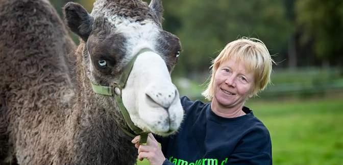 В Німеччині розпочали виробництво верблюжого молока: цікаві деталі