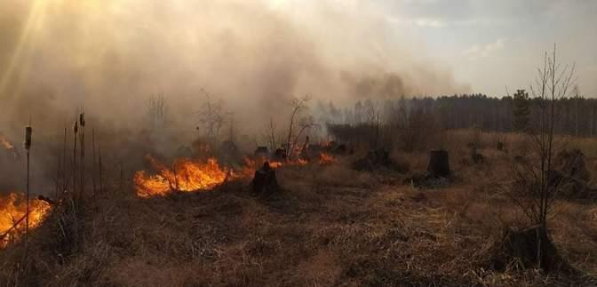 Депутатам рекомендують посилити відповідальність за підпал трави та лісів