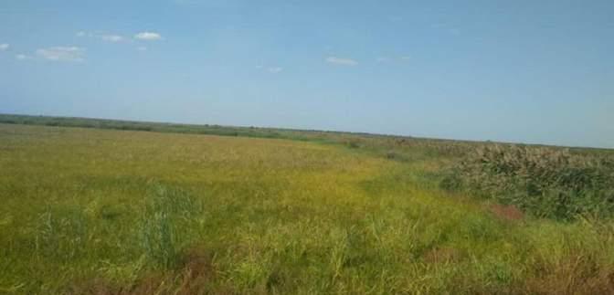 На Одещині підприємці намагалися привласнити землі на 80 мільйонів