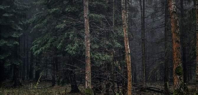 В лесу под Полтавой нашли тело мужчины, которого искали почти 2 недели