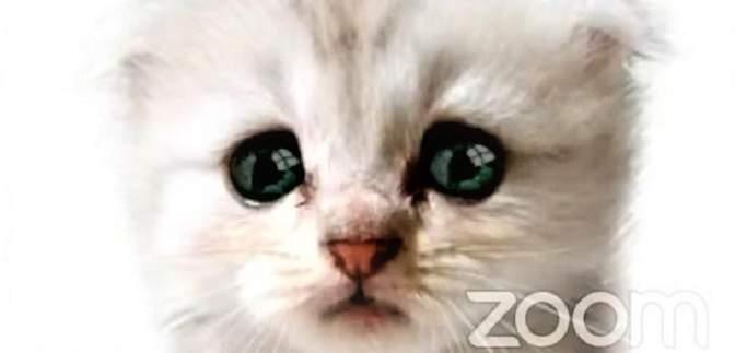 Курьезы в Zoom: адвокат появился на онлайн-заседании суда в маске кота – смешное видео