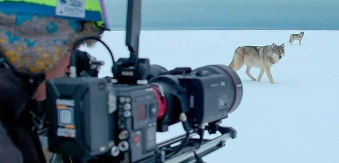 Британський режисер дикої природи знімає неймовірні відео: приголомшлива підбірка
