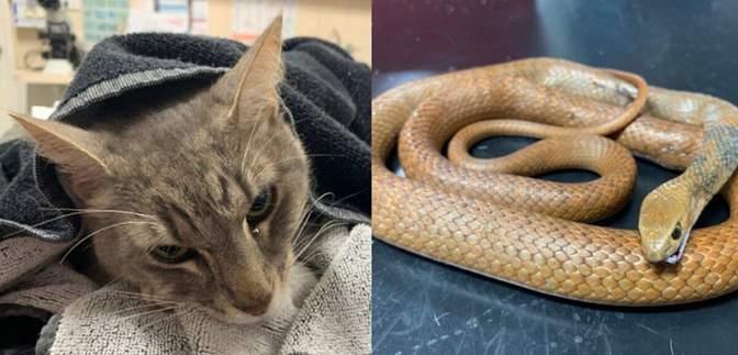 В Австралии кот спас свою семью от ядовитой змеи ценой собственной жизни