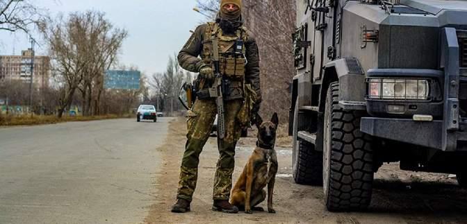 Собака помогла отыскать схрон боеприпасов в прифронтовой Авдеевке: фото
