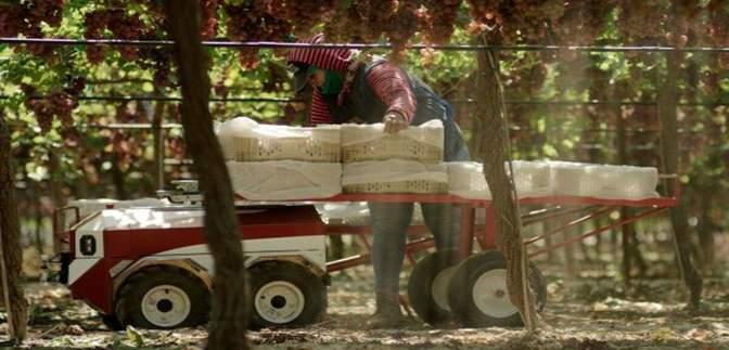 У США представили робота, який збиратиме врожай: чим особливий Carry