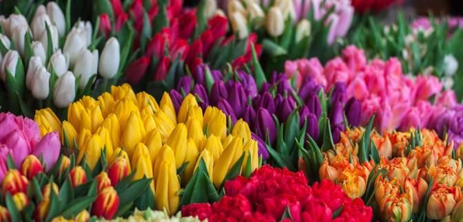 Скільки коштують квіти до 8 березня: ціни у містах України