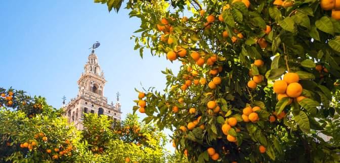 В Испании будут производить возобновляемую энергию из апельсинов