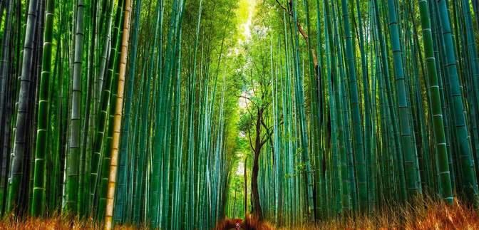 Шварцвальд та Монтеверде: дивовижні ліси планети, які вразять найзатятішого мандрівника – фото