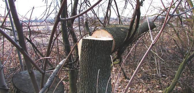 На Миколаївщині депутат вистрілив у чоловіка: сталась сутичка через спиляне дерево