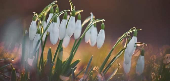 Прогноз погоди на 13 квітня: почне холоднішати, можливий мокрий сніг