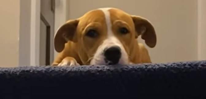 Спасенный щенок боялся заходить в дом: чем закончилась трогательная история
