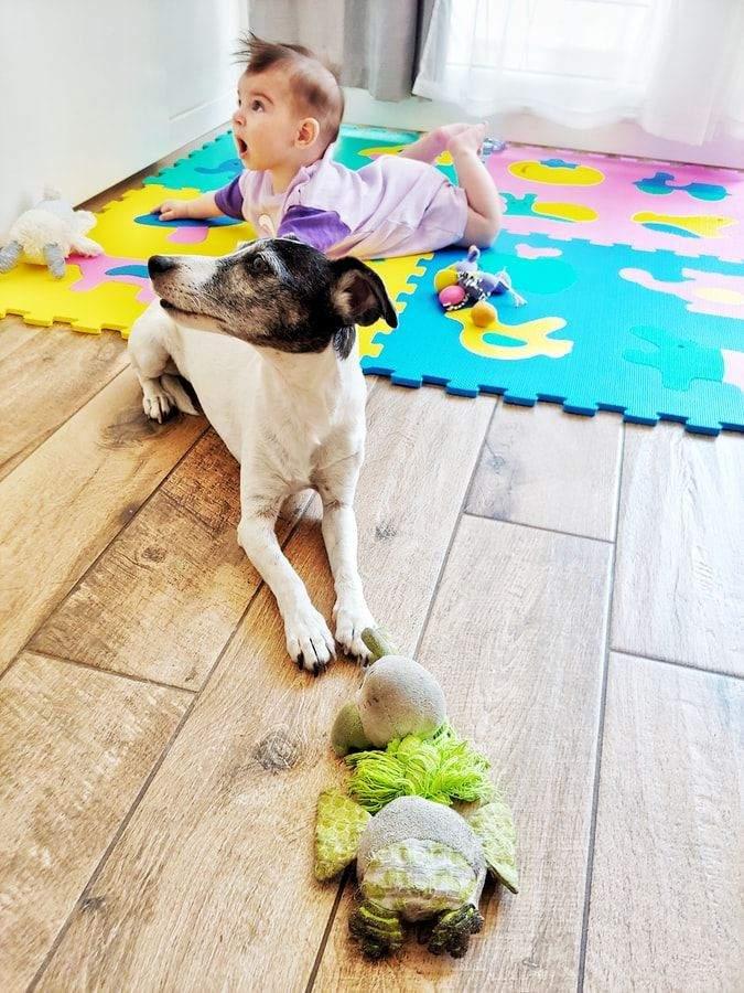 Собака і немовля
