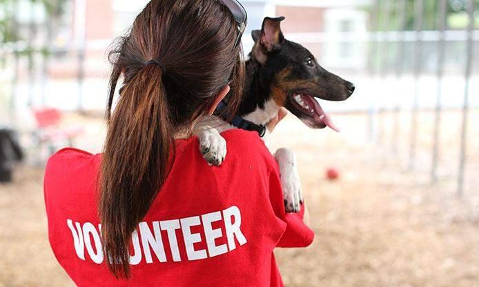Волонтеры попросят вас рассказывать о жизни животного