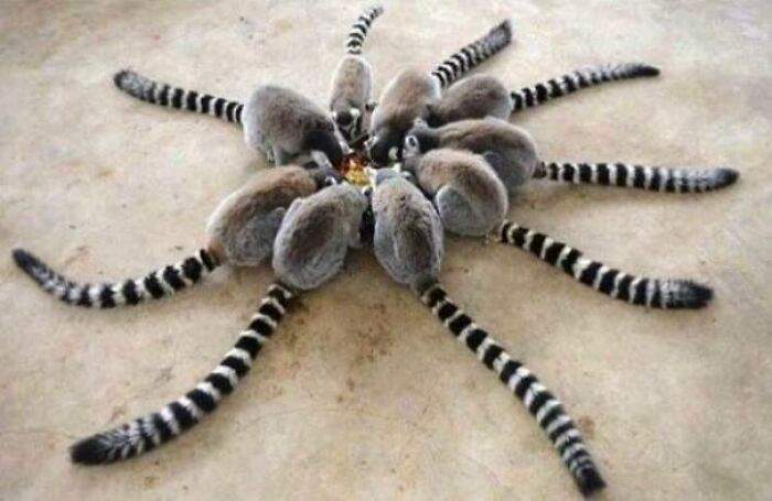 Дуже небезпечний волохатий павук