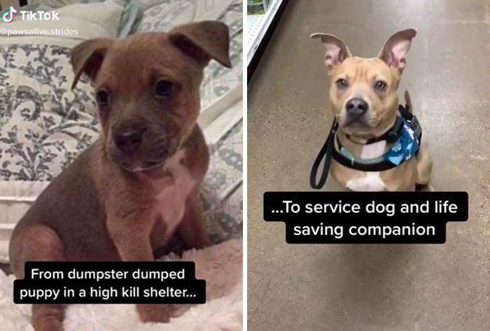 ...Стал служебной собакой