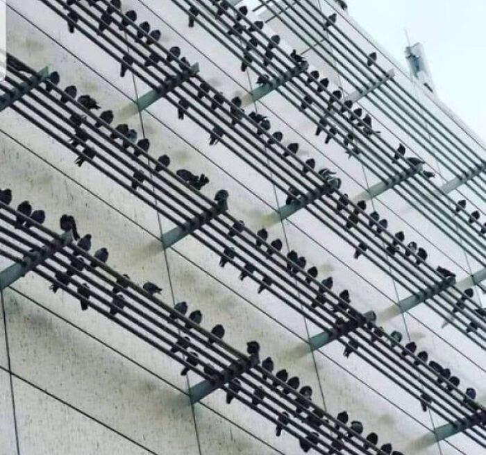 Просто музичні ноти