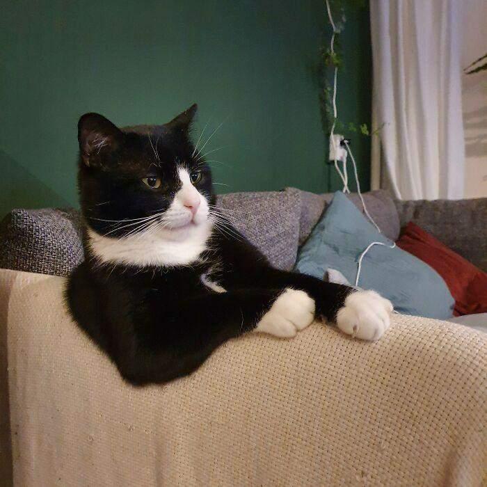 Після усиновлення цей кіт завжди так сидить