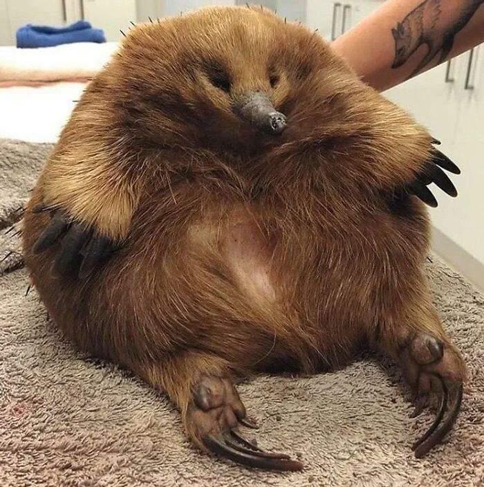 Это впечатляющее животное попало в ветеринарную клинику, но с ним все хорошо