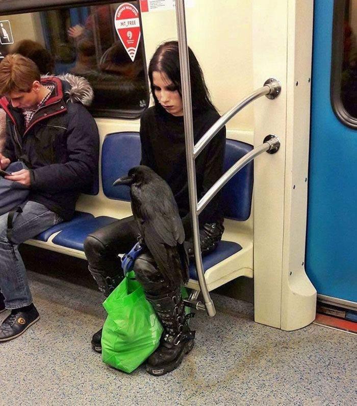 Ничего особенного, просто ворон в метро