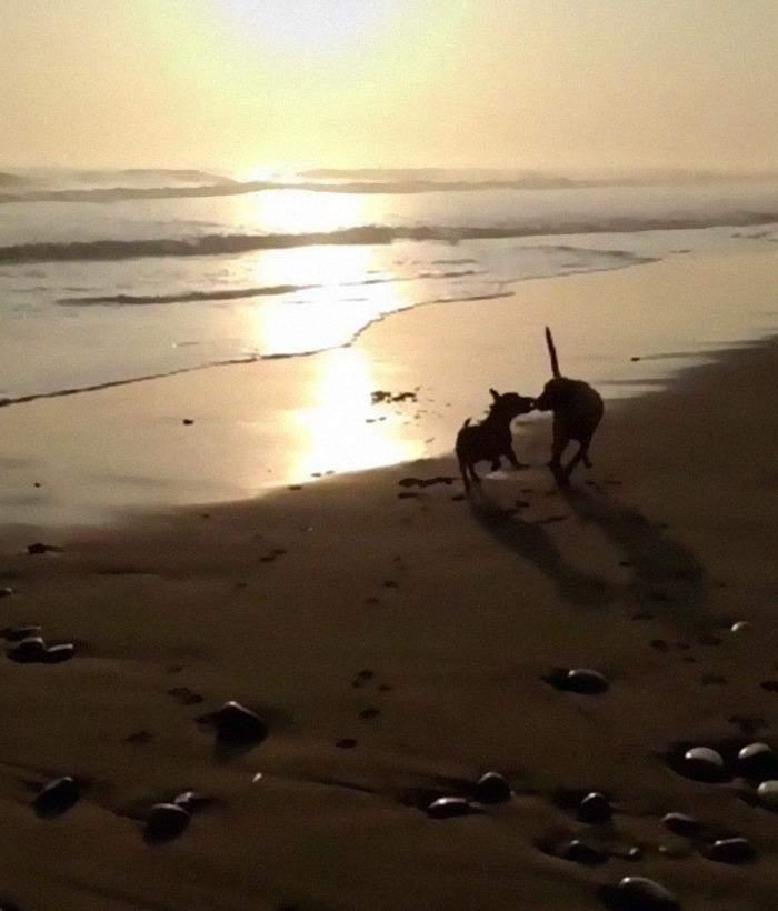 Тобі й Спайк на пляжі