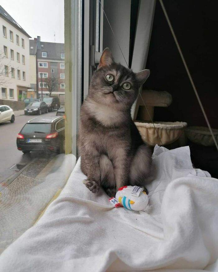 Кішка завжди дивиться у вікно, коли хазяйка йде на роботу