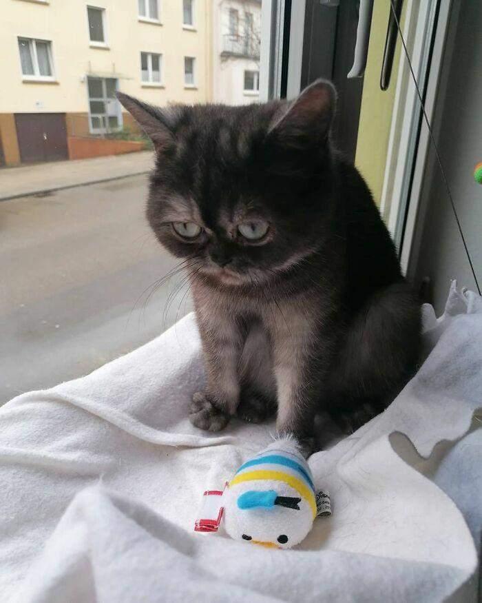 Кішка завжди має кумедний та ображений вираз морди