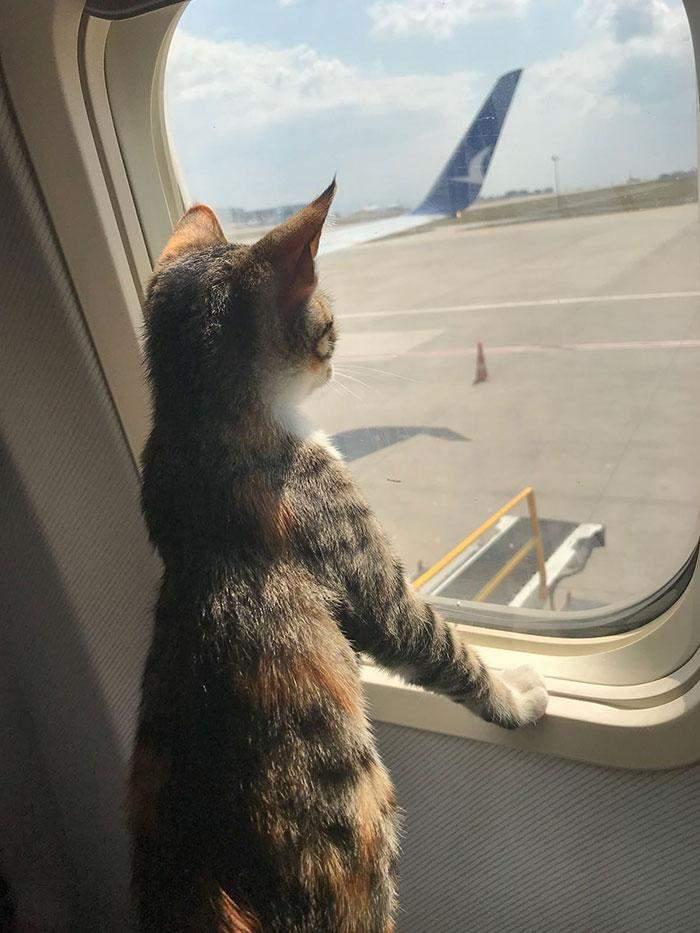Только посмотрите на этого малыша в самолете