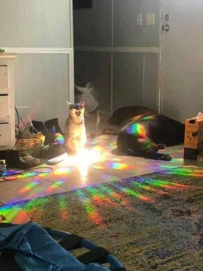 Фото Animals With Powerful Auras