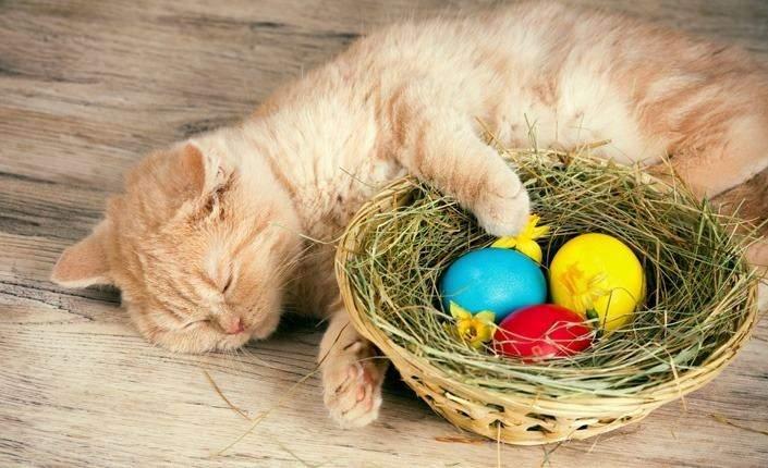 Кіт і великодні яйця
