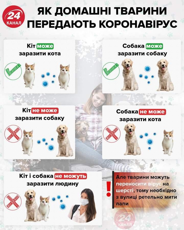 як домашні тварини передають коронавірус