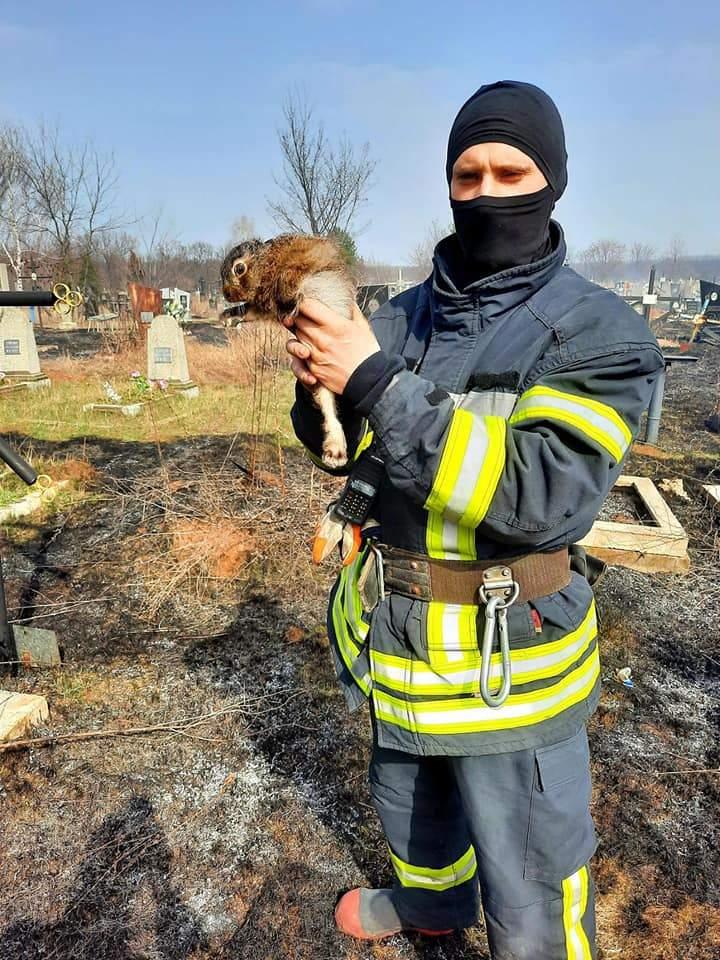 пожежні врятували зайченя