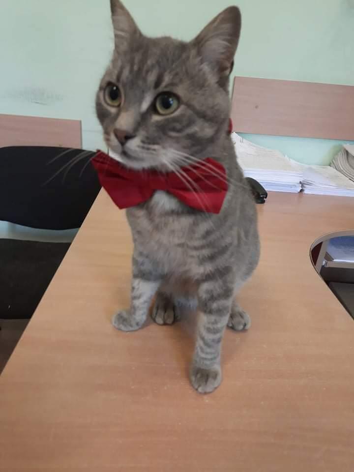 кот Мирон
