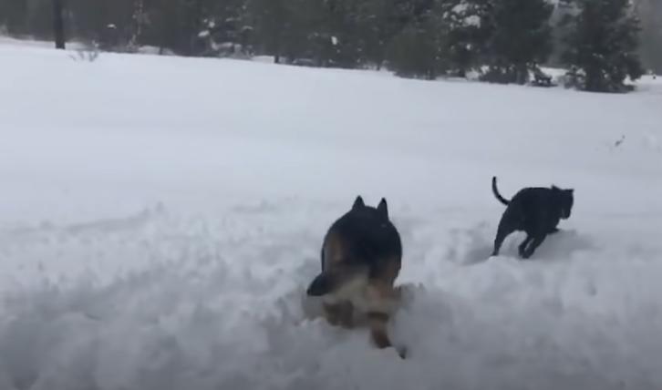 Пес не мог долго бегать